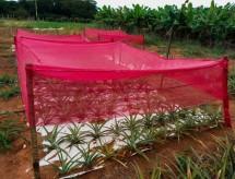 CAPES apoia projetos de produção vegetal no Semiárido